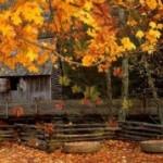 Живая заставка «Осень» для Андроид
