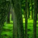 Заставка дремучий лес под Андройд